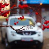 Осень белой машины... :: Александр | Матвей БЕЛЫЙ