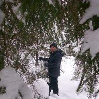 В Зимнем лесу. :: Сергей