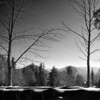Морозные Карпаты. :: Андрий Майковский