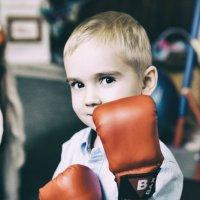 Boxer :: Timetofoto