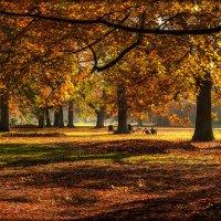 Цветная осень, вечер года :: Natalja Mertens-Zorova