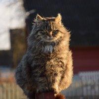 Катафей :: Светлана Ширан