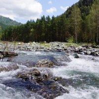 Горная речка Чемал :: Наталия Григорьева