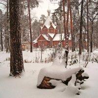 По тропкам в зимнем лесу :: Olga Golub