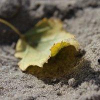 Лист на песке :: Сергей