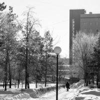 Черно-белая зима :: Екатерина Голышева
