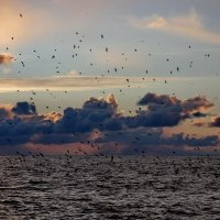 Летали чайки :: Виолетта