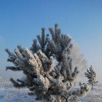 Замёрзла :: Татьяна Аистова