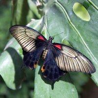 Бабочка :: Виталий