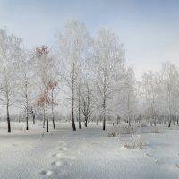 Морозное утро :: Лидия Цапко