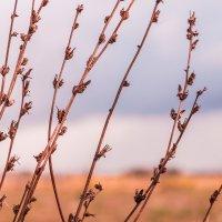 Травинки - былинки :: Елена Бразис