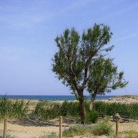 Средиземноморье, весна :: Ирина Сивовол