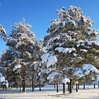 Снежные лапы :: veera (veerra)