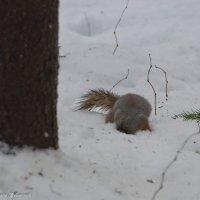 ...Ну где мои орешки? :: Виктор Евстратов