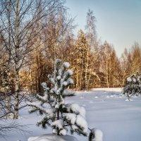 В лесу роди́лась ёлочка :: Андрей Дворников