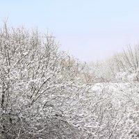 Зимнее утро :: Светлана