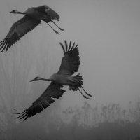 из тумана выплывают... :: Валерий Цингауз
