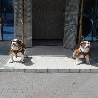 Собаки на входе :: Сергей Грымов