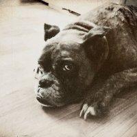 ........памяти любимой собаки(((((((((((.....(без комментариев!!!) :: Жанна ..