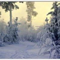 Плюшевый лес :: Василий Хорошев