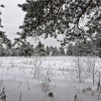 Пока еще зима... :: Galina