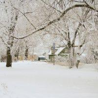 Белая зима :: Светлана Ляшко