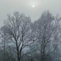 Морозное утро. :: Александр Атаулин
