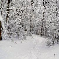 По зимнему лесу с камерой :: Милешкин Владимир Алексеевич