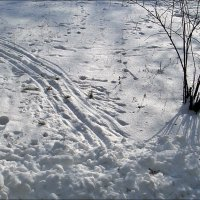 Следы на снегу :: Нина Корешкова
