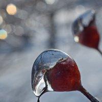 Лед и солнце :: Олег Плотников