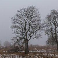 Холод и туман Прибалтики :: Игорь Вишняков