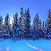 Сибирский лес :: Анатолий Иргл