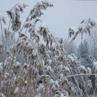 Трава зимой :: Елена Павлова (Смолова)