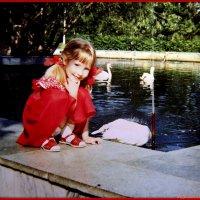 В парке с лебедями :: Андрей Заломленков