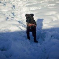 Мощный щенок. :: Света Кондрашова