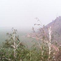 И на камнях растут деревья... :: Виктор Мухин
