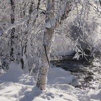 Морозное утро :: Юрий Приходько