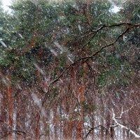 Снег идёт :: Надежда Бахолдина