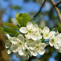 Весна на дворе :: Paparazzi