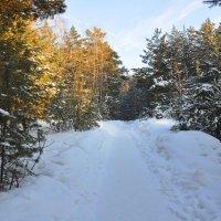 Зимняя тропа :: Алексей http://fotokto.ru/id148151Морозов