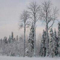 Три богатыря :: Яна Старковская