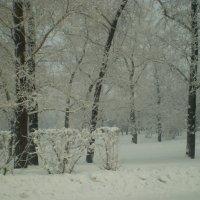 В парке. :: Андрей
