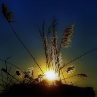Гимн заходящего солнца :: walker