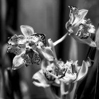 Орхидеи в лунном свете :: Виталий Авакян