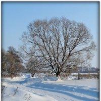 Мороз и солнце. :: Жанна Корнеева