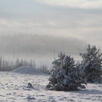 Туман. :: Ирина Волкова