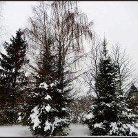 Лесной пейзаж :: Natali