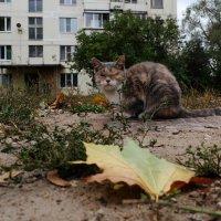 Кошка, злобная немножко :: Андрей Михайлин