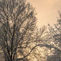 Рассвет зимним утром. :: Ольга Козинец