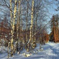 Накатана морозная лыжня... :: Лесо-Вед (Баранов)